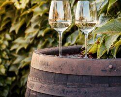 Vini bianchi toscani per l'estate